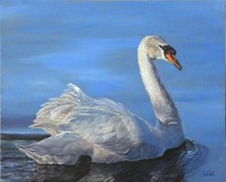 Swan in Morning Light