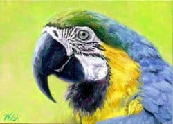 Blue and Yellow Fellow