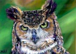 Grouchy Owl